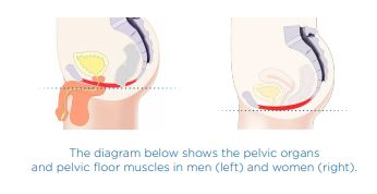 Urinary incontinence in men treatments at Sparx Aesthetics in Winchester